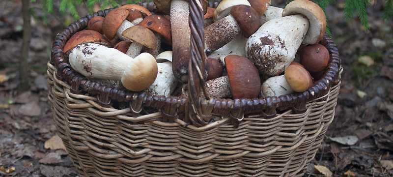 Романтичная осень в дачном поселке «Тихие луга»